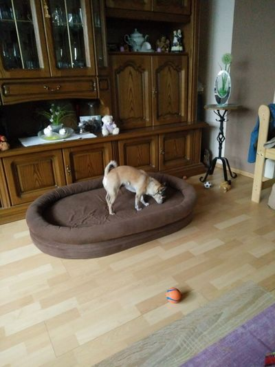Domestic Animals Mammal Animal Themes Indoors  Dogbed Rug Hardwood Floor Doorway Home Interior Full Length