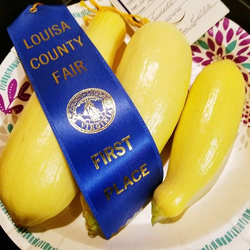 Paint The Town Yellow Close-up High Angle View Indoors  Day No People Squash Vegetable Yummy! Fresh Homegrown Blue Ribbon Fair Louisa Co.