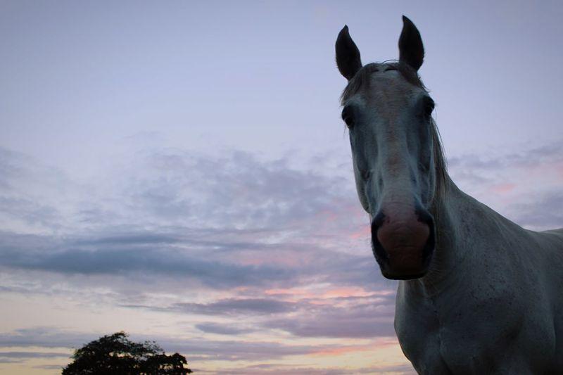 Troy Horse Photography  Eye4photography  Tadaa Community