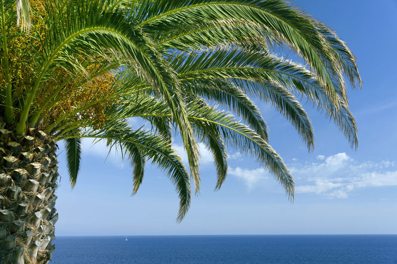 Cropped palm tree against calm sea