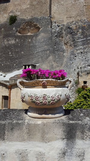 Matera, Italy Stone Wall Flowers Flowers In A Pot Pot Fuchsia Flower