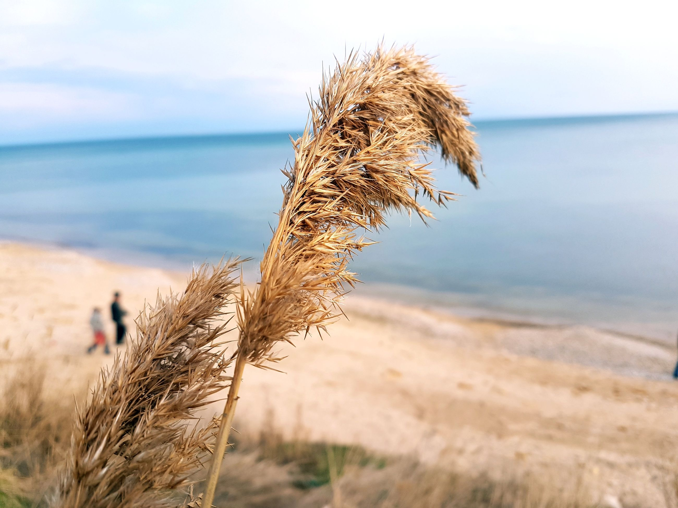 sea, nature, water, horizon over water, scenics, sky, tranquility, beach, tranquil scene, no people, growth, day, outdoors, beauty in nature, close-up, mammal