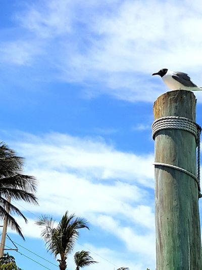 Birdy No People Day Outdoors Cloud - Sky Sky Palm Tree Animal Wildlife Nature Bird Perching Water Artistic Photo Contrast In Nature Adventurer Adventure Is Out There Nature Photography Low Angle View Blue Animals In The Wild One Animal Nature Lover Exploremore Tree View Trees And Sky