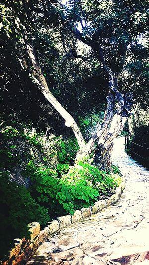 Holiday♡ Nature Taking Photos Nofilternoedit Trees