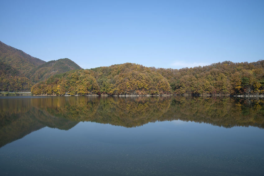 autumn landscape of Busodamak, a beautiful lake located in Okcheon, Chungbuk, South Korea Autumn Autumn Lake Beauty In Nature Clear Sky Day Lake Lake In Autumn Lake In The Morning Lake Reflection Morning Lake Mountain Mountain Range Nature No People Outdoors Reflection Scenics Sky Symmetry Tranquil Scene Tranquility Tree Water Waterfront