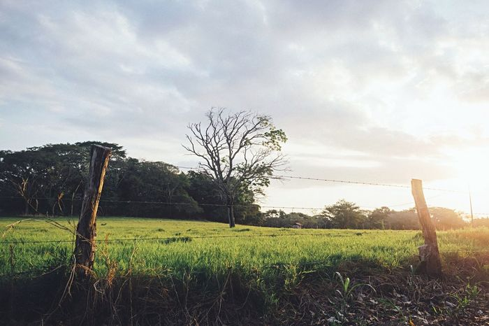 Nature Nature_collection Landscape EyeEm Best Shots Trees Light And Shadow Sky Sunset EyeEm Nature Lover Vscocam