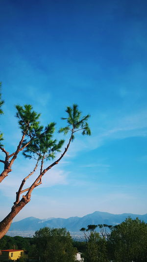 Travel Travel Photography Beauty In Nature Blue Blue Sky Branch Day Forest Growth Landsape Landscape Mountain Nature No People Outdoors Photo Photography Photooftheday Plant Scenics Sky Tranquil Scene Tranquility Travel Destinations Tree EyeEmNewHere