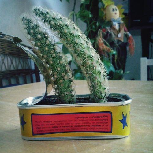 Landscape Relaxing Cactus