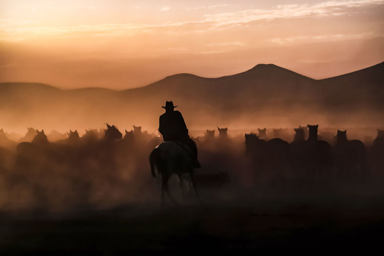 Silhouette man riding horse on field against sky during sunset