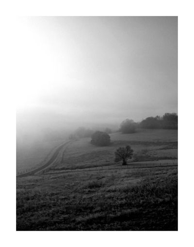 The Great Outdoors - 2017 EyeEm Awards Field Rural Scene Tranquility Landscape Nature No People Fog Beauty In Nature Tree Light And Shadow Blackandwhite Photography BW_photography Bw_lover Bw_collection Black And White Blackandwhite Bw BYOPaper! Traveling Frontier Black & White Noiretblanc Taking Photos Light