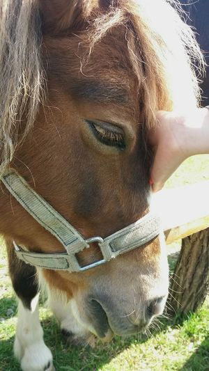 Animal Themes Sunlight Close-up Horse Love Horse Horse Head Eyelash