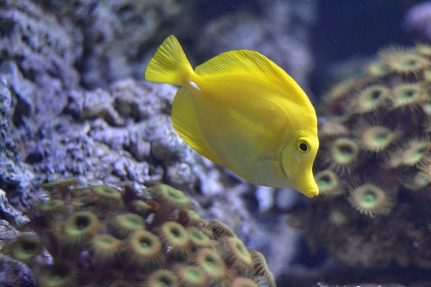 Fish Yellow Animal Underwater Nature Water Aquarium One Animal No People Swimming Sea Sea Life Animal Themes Close-up Day UnderSea