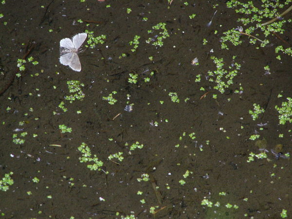 Dead In The Water Green Color Leaves Moth No People Outdoors Puddle Showing Imperfection Samsung NV7
