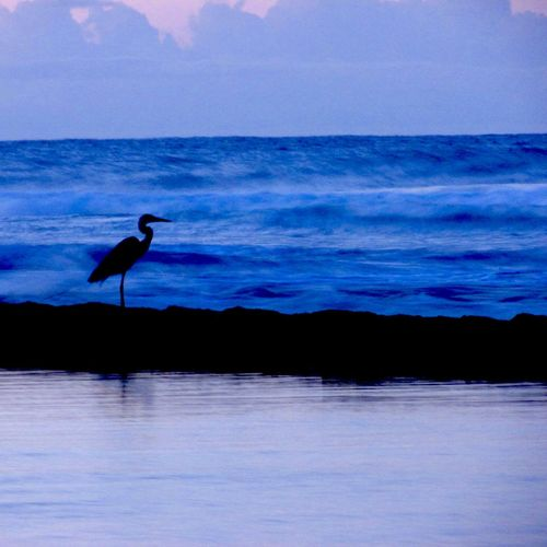 >}- F L Y Λ W Λ Υ -{< Water Beach Birds Waves Colorsplash Nature Nature_collection Colors