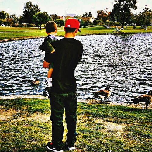 From My Point Of View Multiple Layers Park Ducks Father & Son