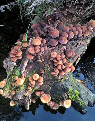 Nature Mushroom Fungus Log Growth Vegetable Plant Outdoors Forest Tree Close-up Timber No People Day Freshness