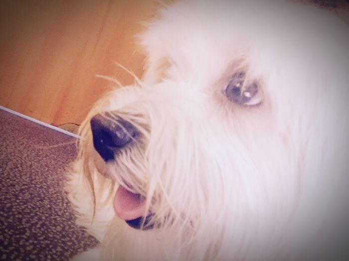 Ilovemydog Isis😍 Inlovewithmybaby Myprincess🐶🐶 Aeroport ✈ Readytogo
