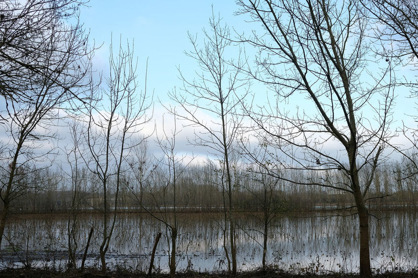 Deuxsevres Tree Water Bare Tree Tranquility Plant Lake Sky Tranquil Scene Beauty In Nature Scenics - Nature No People Nature Non-urban Scene Branch Day Reflection Outdoors Forest