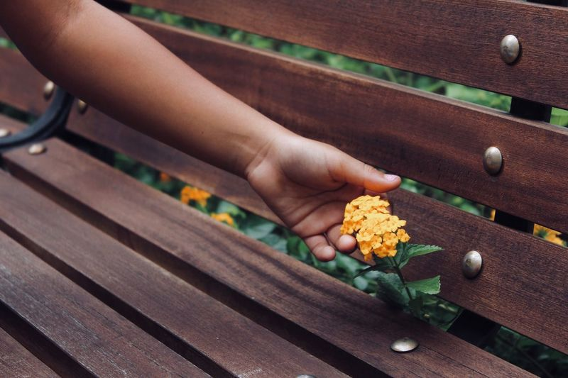 High angle view of hand holding yellow flower on wood bench