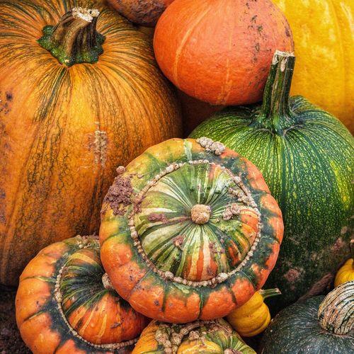 High angle view of pumpkins