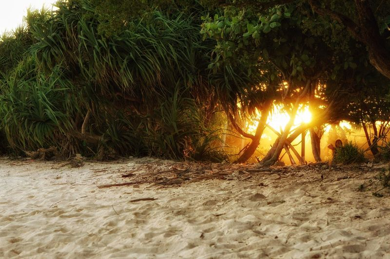 The Great Outdoors - 2017 EyeEm Awards Never be afraid to trust an unknown future to a known God. -Corrie ten Boom- Nature Sand Beach Tree Beauty In Nature Sunset Gili Islands INDONESIA Indonesia_photography Art Is Everywhere Sunset #sun #clouds #skylovers #sky #nature #beautifulinnature #naturalbeauty #photography #landscape Hidingsun Your Ticket To Europe EyeEmNewHere Connected By Travel Lost In The Landscape