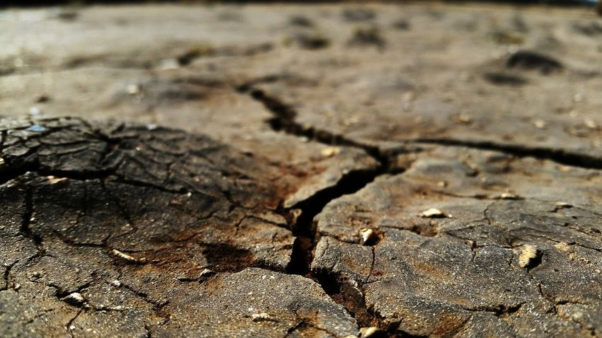 Close-up Nature Selective Focus Day Outdoors Focus On Foreground Ground Crack Cracked Earth Non-urban Scene