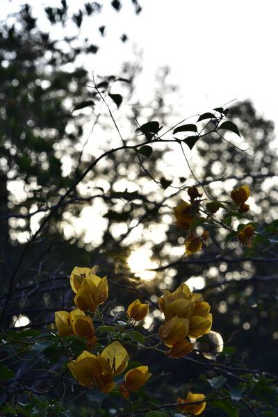 EyeEm Best Shots EyeEm Nature Lover EyeEm Gallery Eyeem4photography Beauty In Nature Flower Tree Branch Leaf Fruit Close-up Sky Animal Themes Plant Blooming Flower Head In Bloom