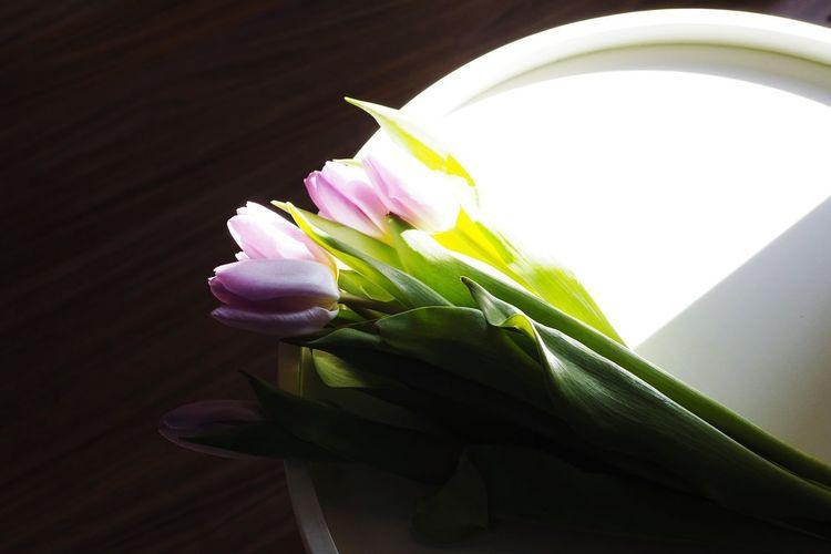 Shadows & Lights Shadow Light Flower Head Flower Petal Studio Shot Close-up Plant Life In Bloom Blooming Tulip Purple Botany