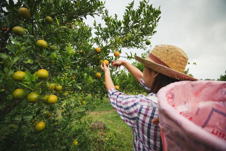 Woman holding orange on tree at farm