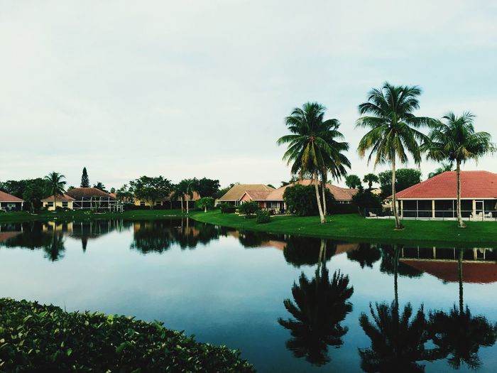 Reflection of coconut palm trees in lake by houses against sky