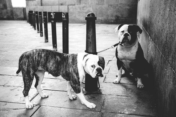 Dawgs Light And Shadow Barcelona Landscape Pet