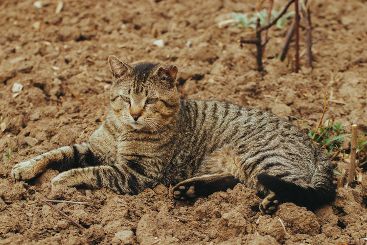 Close-up of a cat lying on field