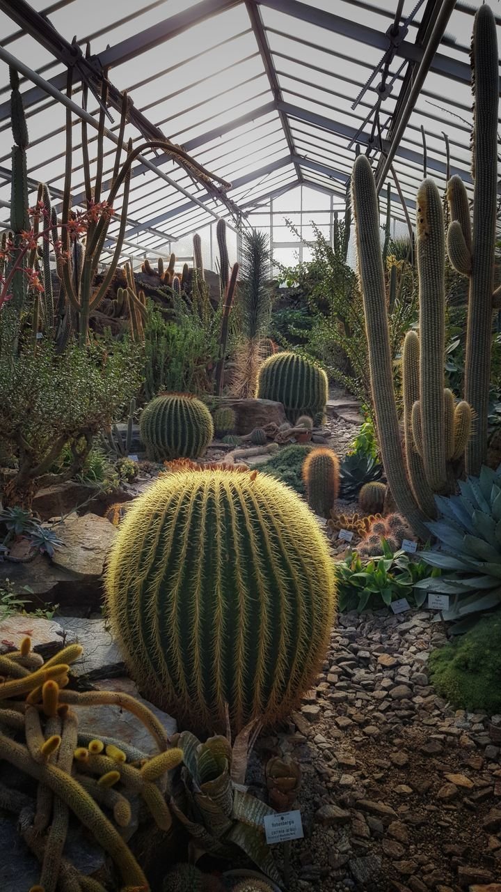 plant, growth, cactus, succulent plant, greenhouse, nature, no people, barrel cactus, day, beauty in nature, agriculture, green color, field, outdoors, botany, plant nursery, land, garden, freshness
