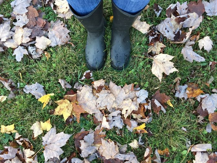 Low section of person standing by autumn leaves on field