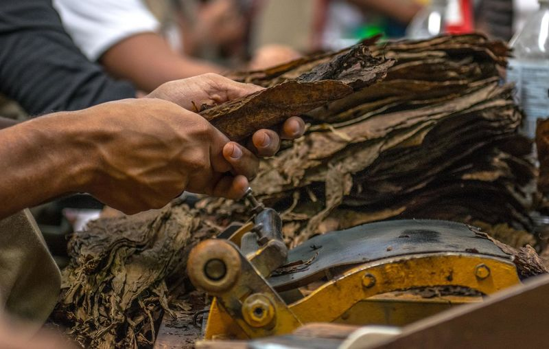 Making Cigar´s Tobaco Art And Craft Business Expertise Hand Human Body Part Human Hand Indoors  Men Occupation One Person Real People Working Workshop