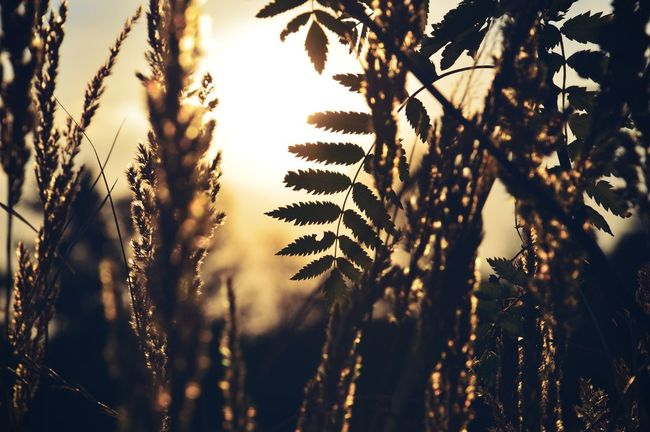 43 Golden Moments Golden Gold Sky Sunset Summer Nature Silhouette Outside Photography Leaves