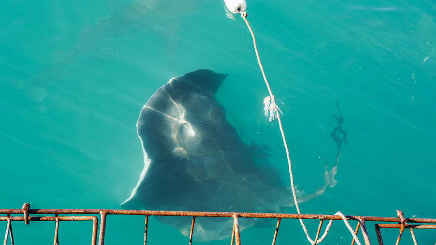 Luring stringray south africa attraction