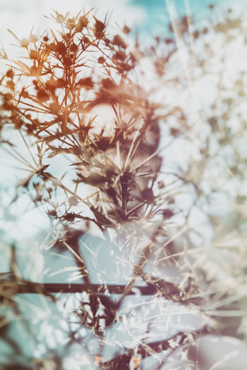 Double Exposure Double Exposure Abstract Multiple Exposures Beauty In Nature Close-up Day Dry Flower  Flower Fragility Freshness Growth Nature No People Outdoors Plant Sky Tree