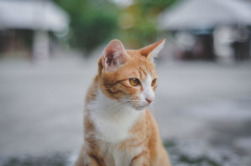 Domestic Cat One Animal Mammal Cat Domestic Animals Animal Eye Close-up