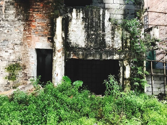 Plants growing on old abandoned building