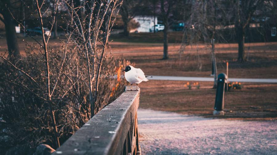 Bird perching on a park