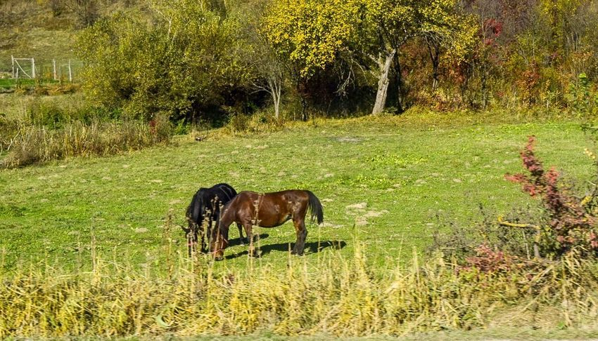 Grass Nature No People Animal Themes Outdoors Field Day Green Color Plant Growth Domestic Animals Animals In The Wild Beauty In Nature Horse #FREIHEITBERLIN