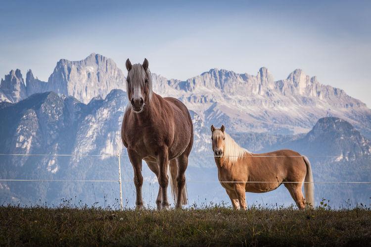Horses standing on field against mountain range