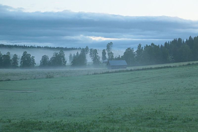 Tranquility Silence Cottage Life Farmers Farmlife Farmhouse Early Morning Fog Tranquil Scene Barn Barnlife Foggy Morning Silent Place Field Foggy Countryside Life Farmland Forest Farm Life Meadow Tranquil Silent Landscape Foggymorning Landscape_photography Blue Hour