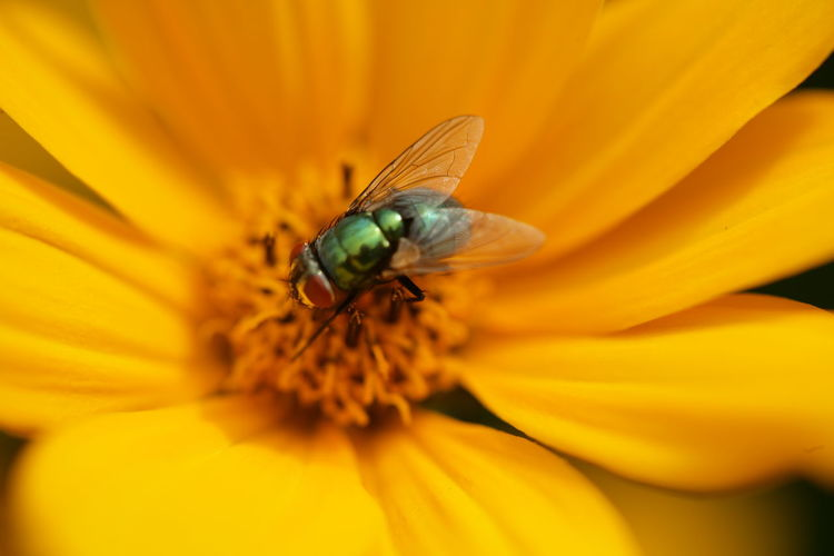 Close-Up Of Fly On Flower