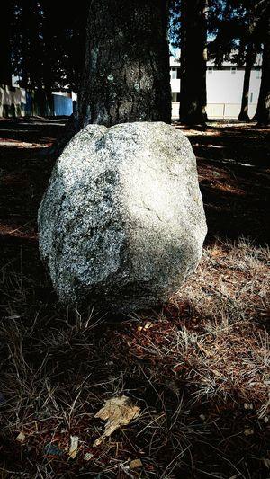 Rock Tree Day