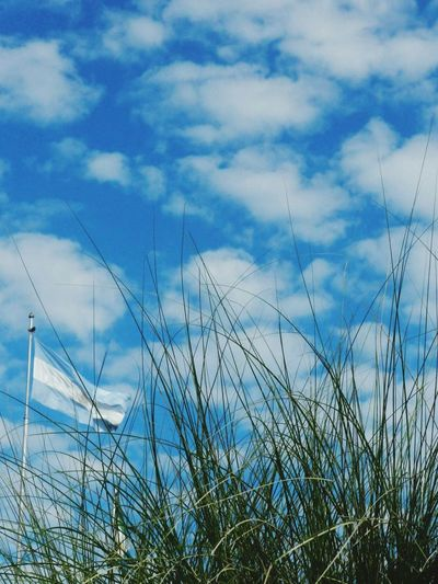 Alta En El Cielo! Bandera Argentina. Nature Cloud - Sky No People Grass Outdoors Day Flags In The Wind  Chaco The Week On EyeEm