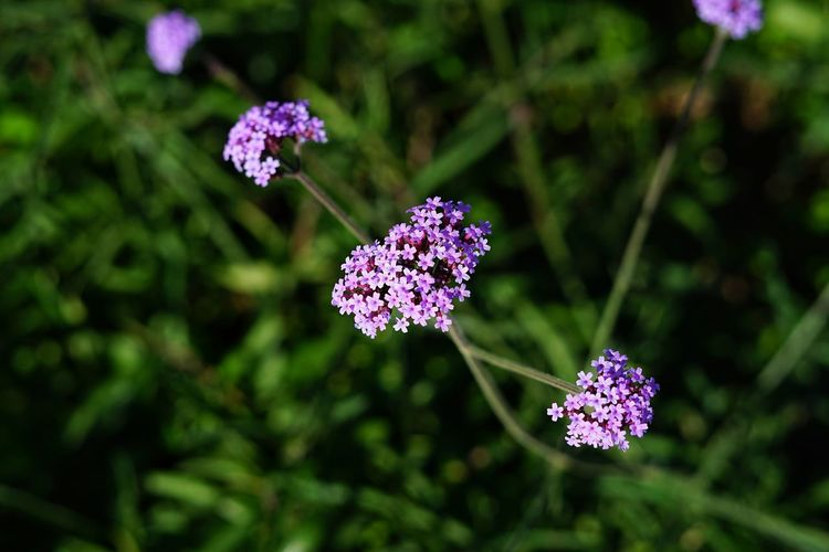 No People No Person Day Flower Head Flower Nature Reserve Plant Part Butterfly - Insect Pink Color Outdoor Pursuit Purple Close-up Plant Flowering Plant Plant Life In Bloom