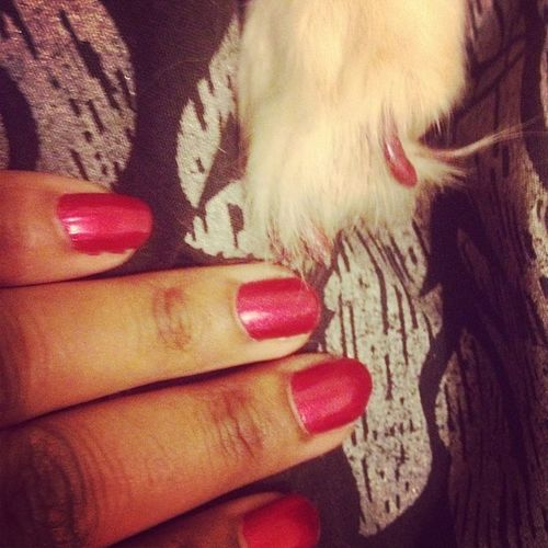 painted mine & the dogs nails. ??? Nails Painted Mudnailpolish Wineo bestnailpolishever colour myself and my sisters dog hand paw boredom cute adorable love instadog instanails instapup instapic instalove instalike instacute instagram doubletap