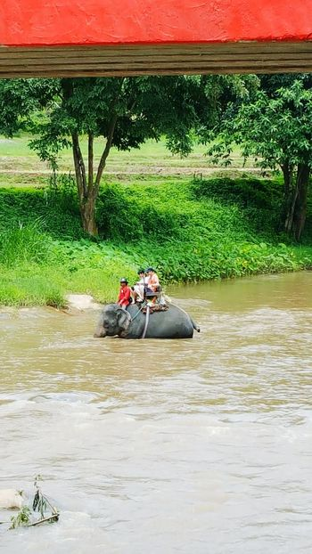 Forestwalk Elephant Chiang Mai | Thailand Asianstyle Travel On The Way Elephant Trekking On Elephant Back River